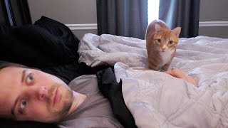 Download 7 Ways Cats Creep You Out! Video