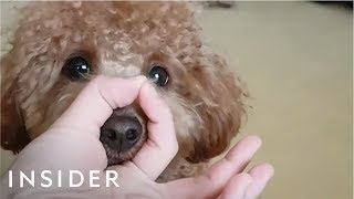 Download Dogs Everywhere Are Doing The Snoot Challenge Video