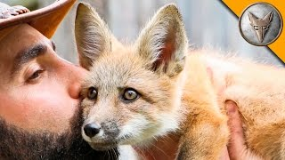 Download Friendly Baby Fox! Video