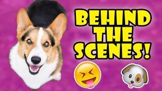 Download CORGI Calendar Shoot - GO BEHIND THE SCENES! Video
