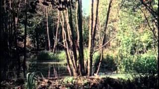 Download Лесная быль(1949) Video