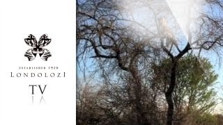 Download Leopard Kills Hyena - Londolozi Video