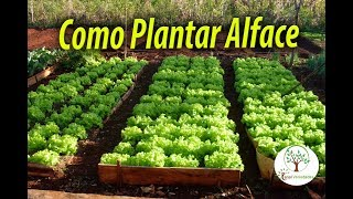 Download Como Plantar Alface e Hortaliças em Casa sem Medo Video