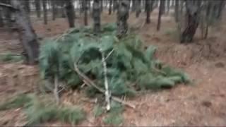 Download Вырубка леса под Новой Одессой Video