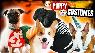Download DIY DOG & PET COSTUMES (CUTE!!!!!) Video