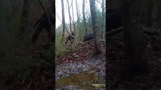 Download Hog on snare trap Video