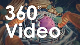 Download 360° Guided Tour of the Cell (demo) Video