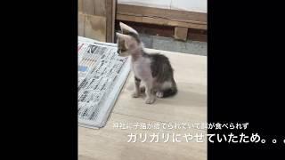 Download ガリガリの猫拾ってきたらすごい綺麗な毛並みになった。【猫LIFE】 Video