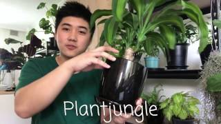 Download My Top 5 Indoor Plants Video