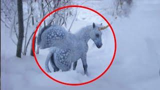 Download 5 Unicorns Caught On Camera ♦️ Real Life Unicorns Video