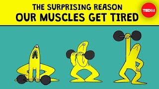 Download The surprising reason our muscles get tired - Christian Moro Video