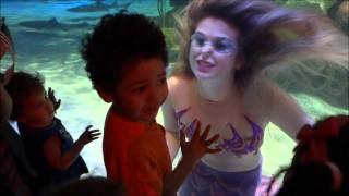 Download Silverton Casino/Lodge Playful Mermaid Video