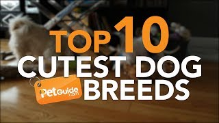 Download Top 10 Cutest Dog Breeds Video