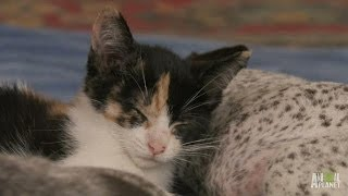 Download Wake Up, No Time for Naps | Too Cute! Video