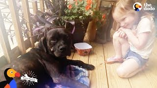 Download Stray Dog Shows Up on Couple's Porch And Changes Their Mind About Dogs | The Dodo Pittie Nation Video