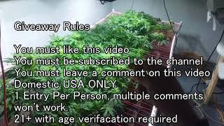 Download 1000 Subscriber Giveaway Enter the Purple Portal! Ocean Grown Seeds Video