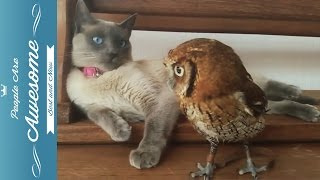 Download Cute Owls Compilation HD Video