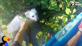 Download Kayaker Rescues Freezing Dog In River   The Dodo Video