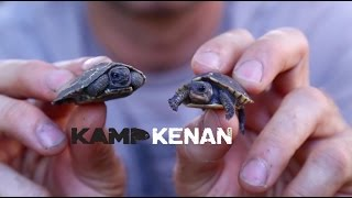 Download Awesome Home Turtle Enclosure Video