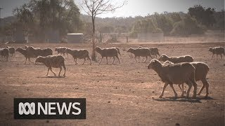 Download The farmers defying drought by restructuring their businesses Video