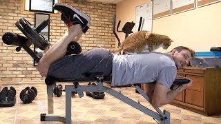 Download Trying To Do Stuff With Cats Around... Video