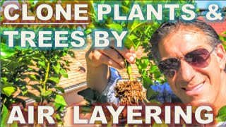 Download CLONE Your Favorite Plants & Trees | AIR LAYERING | Simple Propagation Techniques | BEFORE & AFTER Video