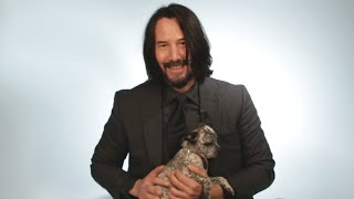 Download Keanu Reeves Plays With Puppies While Answering Fan Questions Video