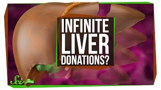 Download Can You Keep Donating and Regrowing Your Liver? Video