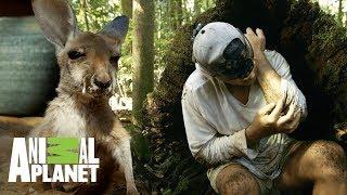 Download Aventuras con Wild Frank: Emociones en Australia | Animal Planet Video