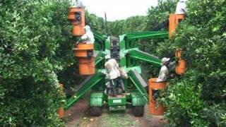 Download Colheita Mecanizada de Laranja - Schülter Video
