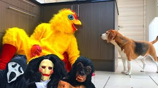 Download Funny Dogs Get Pranked Compilation : Cute Dogs Louie and Marie Video