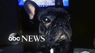 Download Dog dies in plane's overhead luggage bin Video