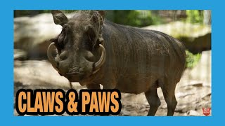 Download Claws and Paws Animal Park Video