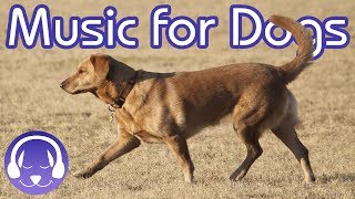 Download 15 Hours of Classical Music for Dogs - Help your Dog Sleep FAST! (2019) Video