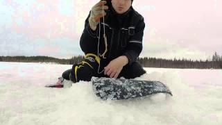 Download Haugi lõksud/ Pike traps/ Gäddsaxar 06.03.2015 Video