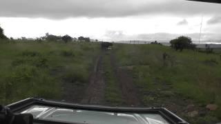 Download Umzolozolo Private Safari Lodge Nambiti Game Reserve Buffalo Charge Video