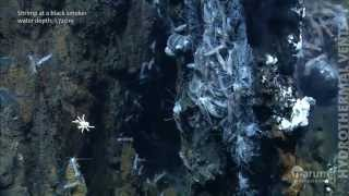 Download Hydrothermal vents in the deep sea Video