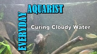 Download What Causes Cloudy White Aquarium Water Video