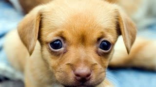 Download Cute Puppies Compilation || NEW Video