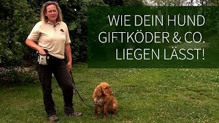 Download Hundetraining ► Anti Giftköder Training ► Wie Dein Hund Giftköder & Co. liegen lässt! Video