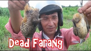 Download EAT OR DIE: Catching and Eating Birds in Cambodia Video