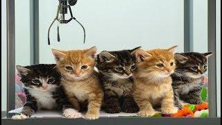 Download Máquina atrapadora de peluches con gatos REALES Video