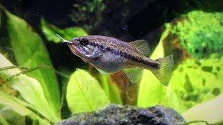 Download Fish Feeding Gone Wrong (Live Bluegills) Video
