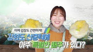 Download [ 절임배추 ] 강원도 절임배추로 맛있는 김장하세요~! Video