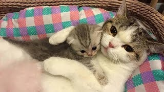 Download Mother Cat and Cute Kittens - Best Family Cats Comilation 2018 Video