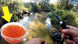 Download Fishing a TINY Creek w/ NASTY Bait!!! Video