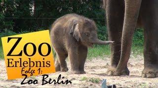 Download Zoo Berlin - Zoo Erlebnis #1 Video