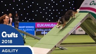 Download Agility - Championship Final | Crufts 2018 Video