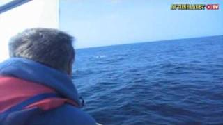 Download submarine?..shark?..UFO?? what the hell is it!!! Video
