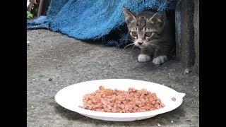 Download 심장을 부여잡고 봐야되는 고양이 영상(4k) Video